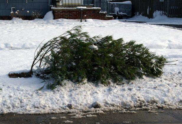 Christmas Tree pick-up. tree - Christmas Tree Pick-up Town Of Exeter New Hampshire Official Website